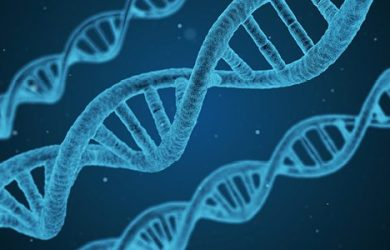 phases of DNA testing